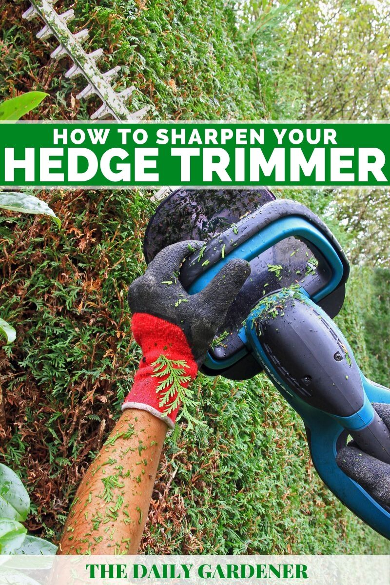 How to Sharpen Your Hedge Trimmer? - The Daily Gardener