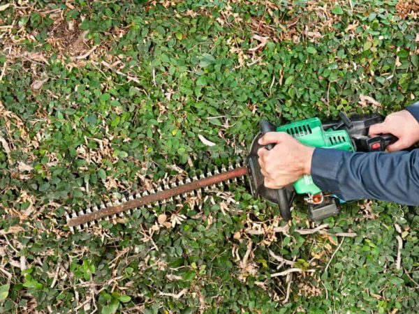 How to Sharpen Your Hedge Trimmer?