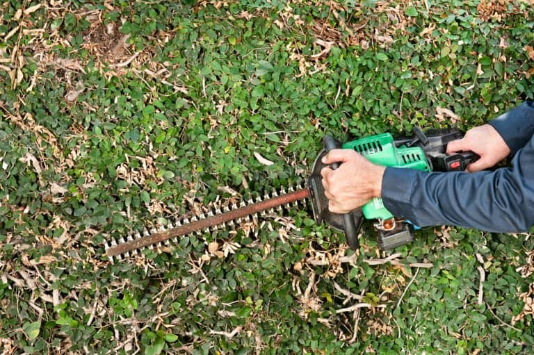 How to Sharpen Your Hedge Trimmer
