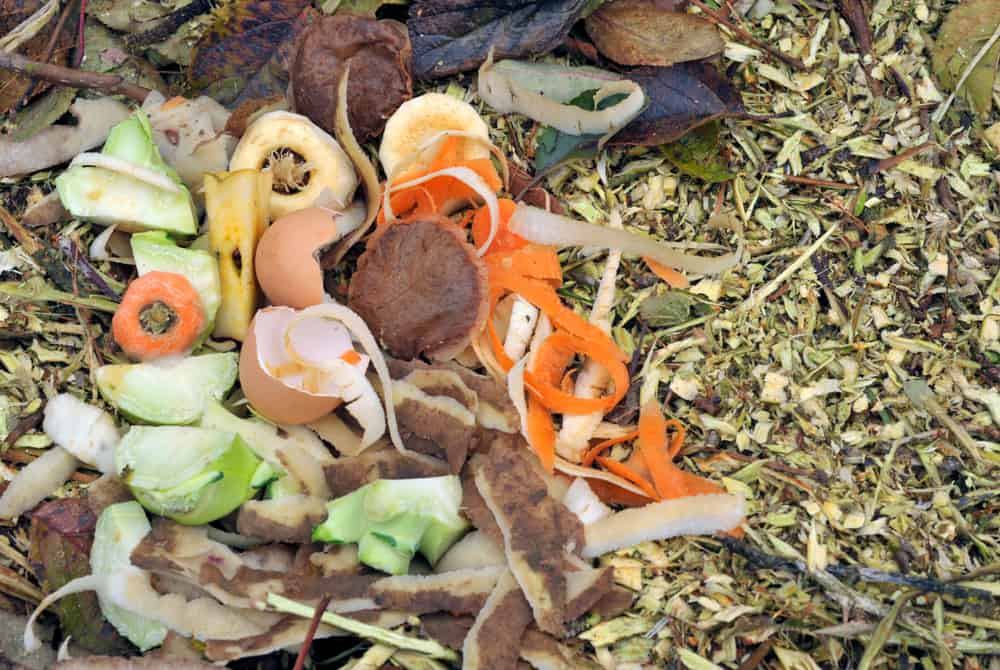 Reasons for the Appearance of Ants in Your Compost Pile 1