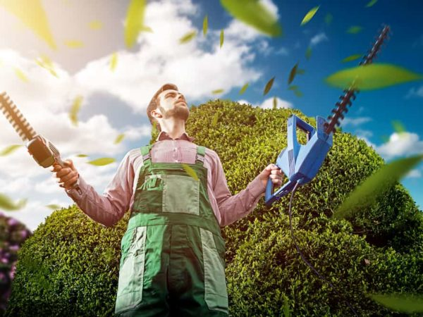 8 Tips to Use Your Hedge Trimmer like a Pro