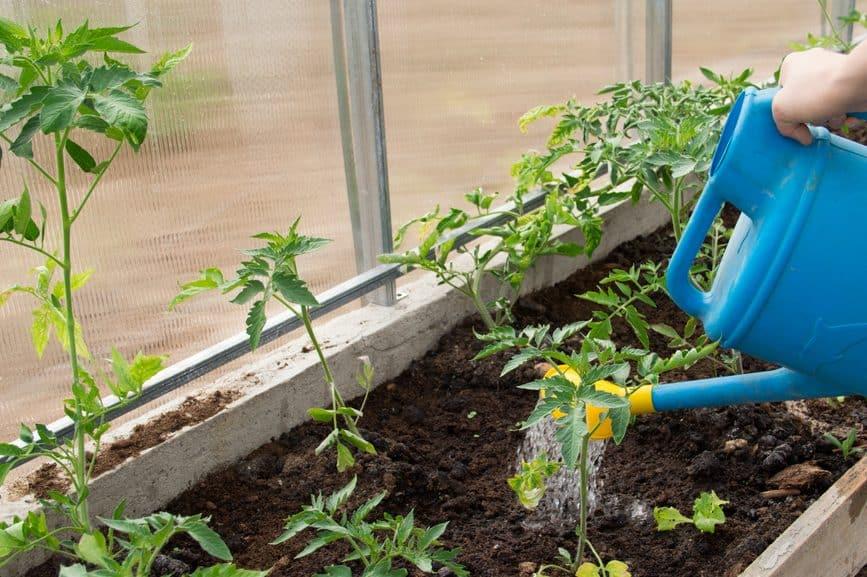 Vegetables watering