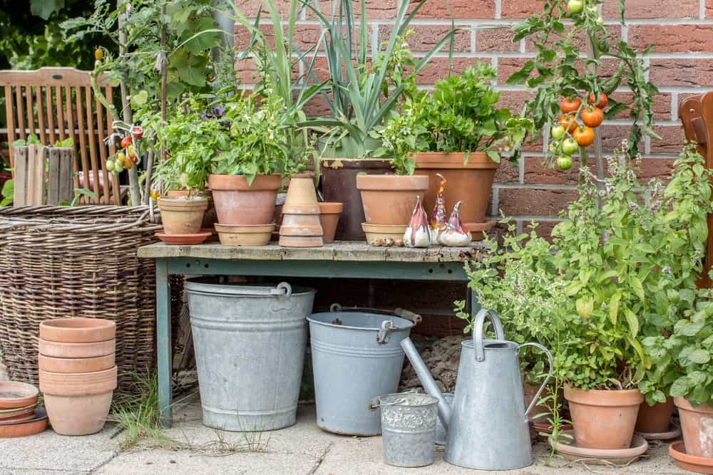 When to Grow Veggies in a Container