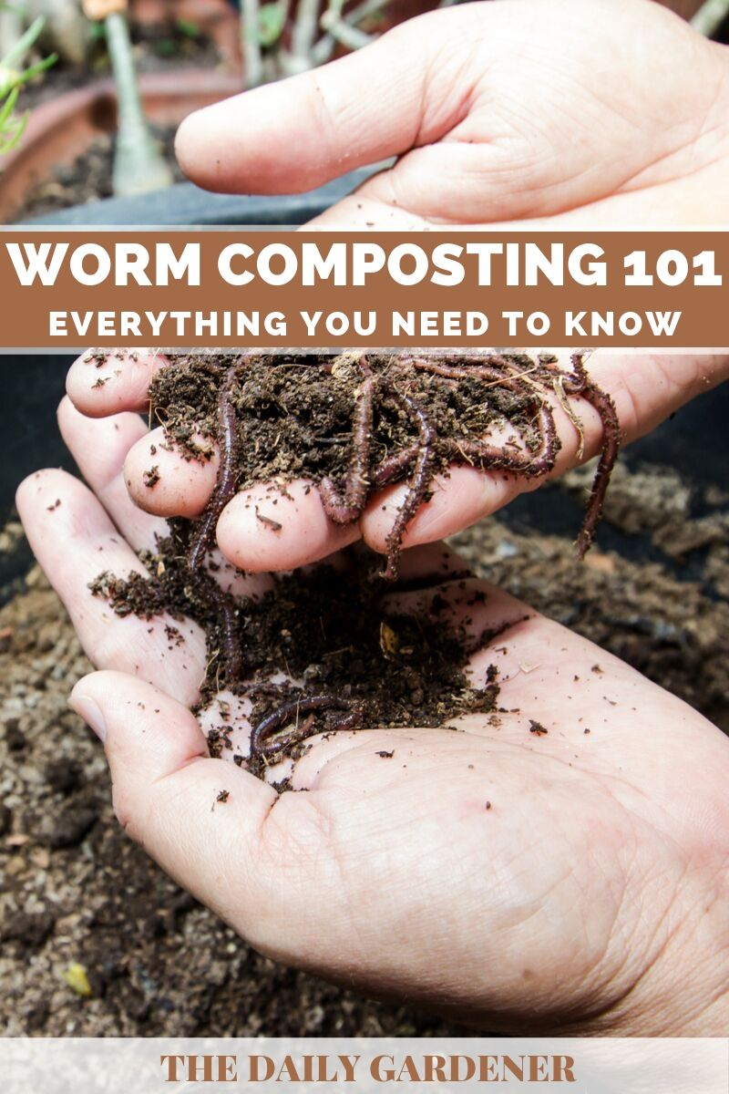Worm Composting 1