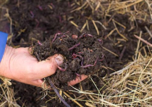 Worm Composting 101: Everything You Need to Know!