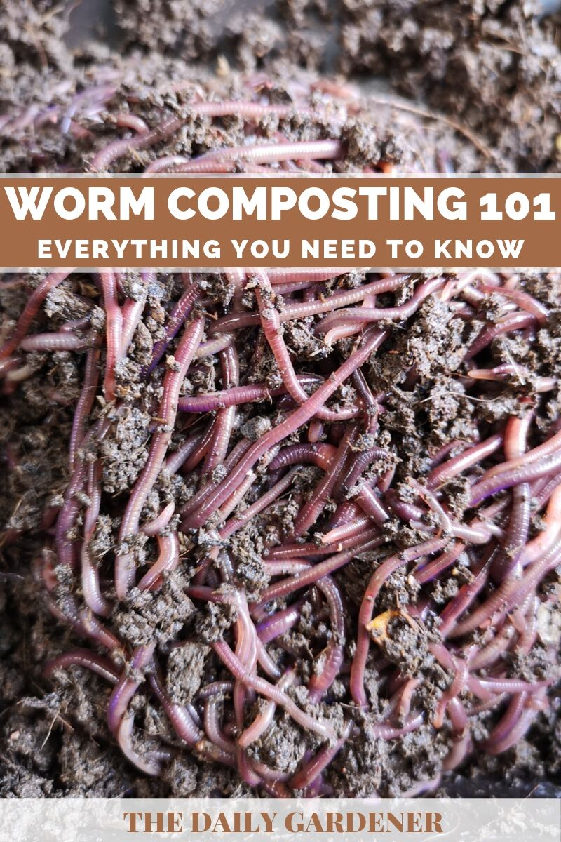 Worm Composting 2