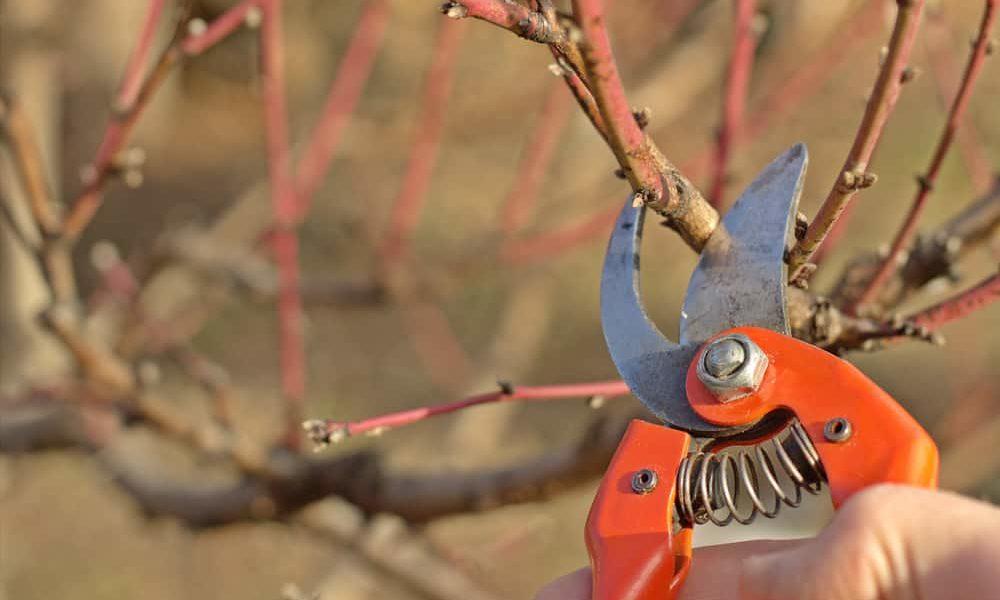 best pruning shears