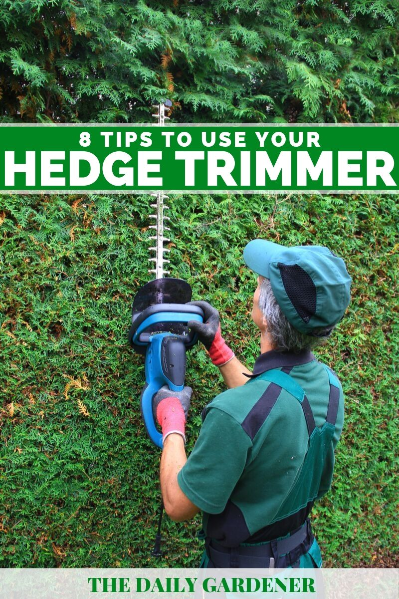 how to use hedge trimmer 1