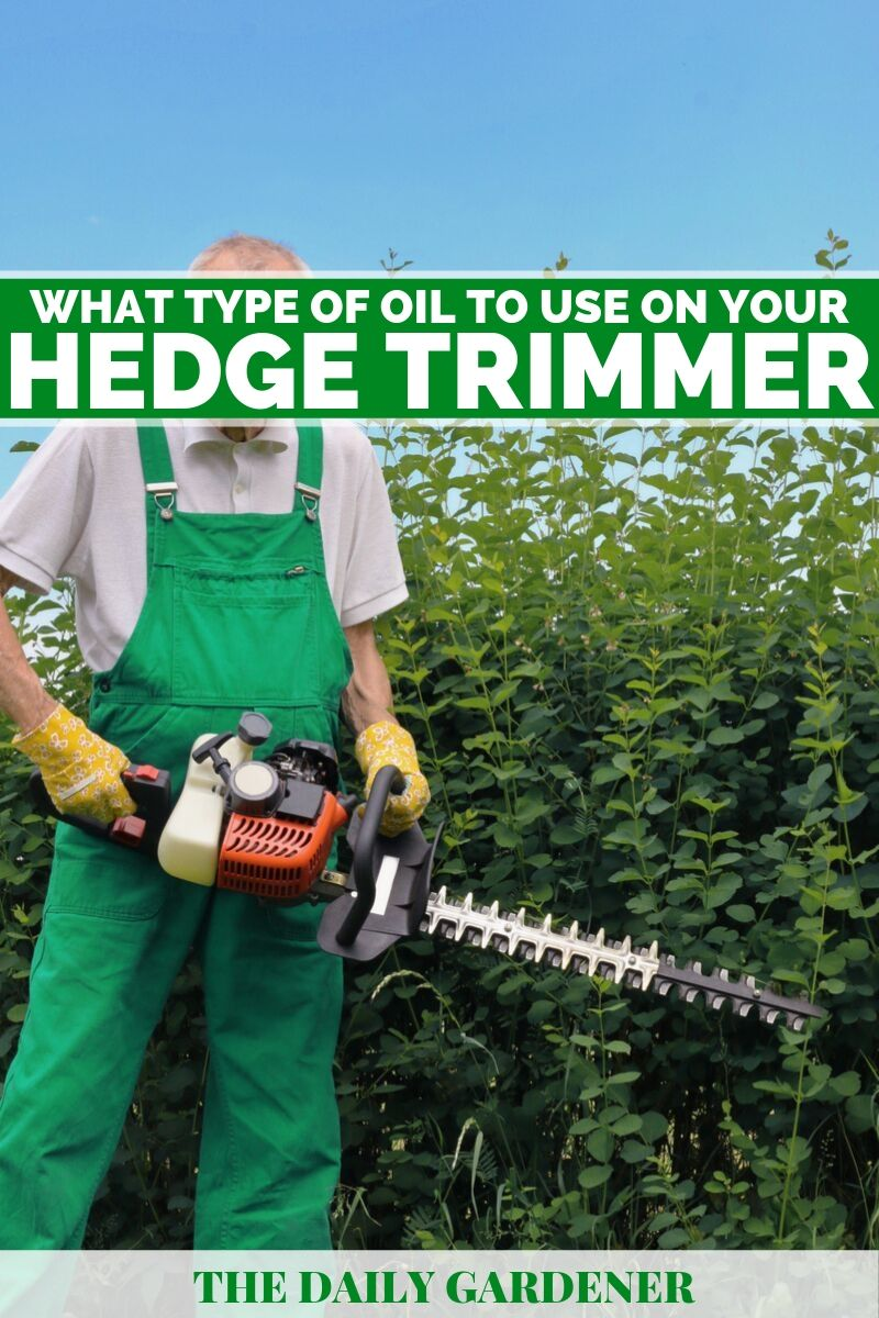 type of oil for hedge trimmer 1