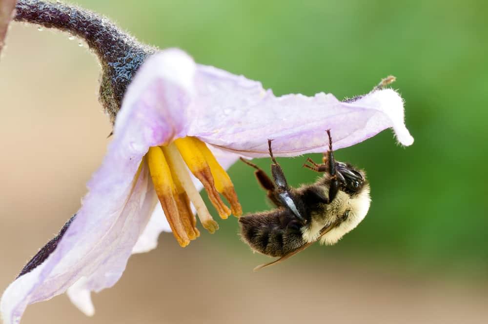 Attract native pollinators 1