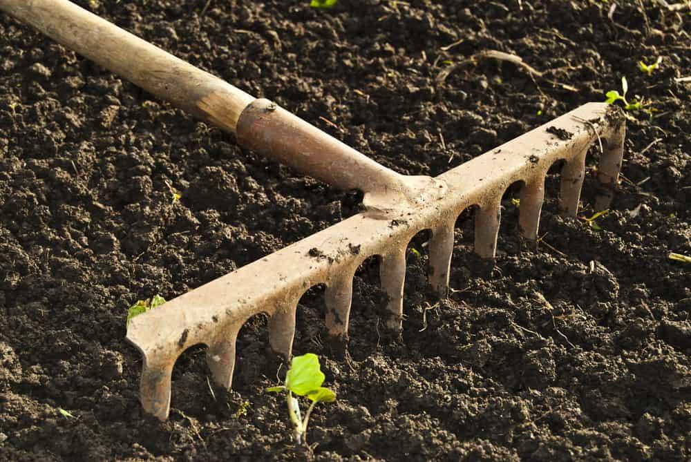Beans the soil