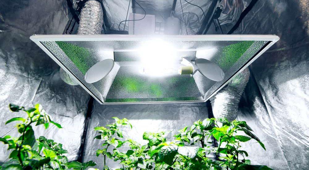 Best Indoor Grow Tent