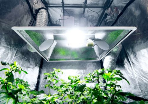 7 Best Indoor Grow Tents of 2019 – Reviews & Buyer Guide