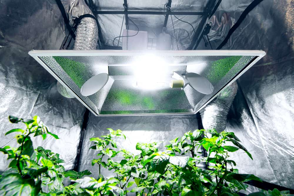 Best Indoor Grow Tent