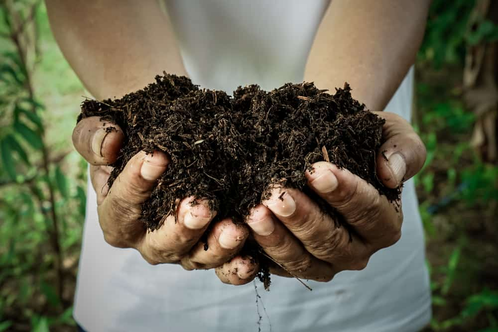 Broccoli Fertilizing
