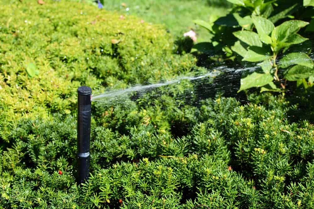 Bubblers (shrub sprinkler head)