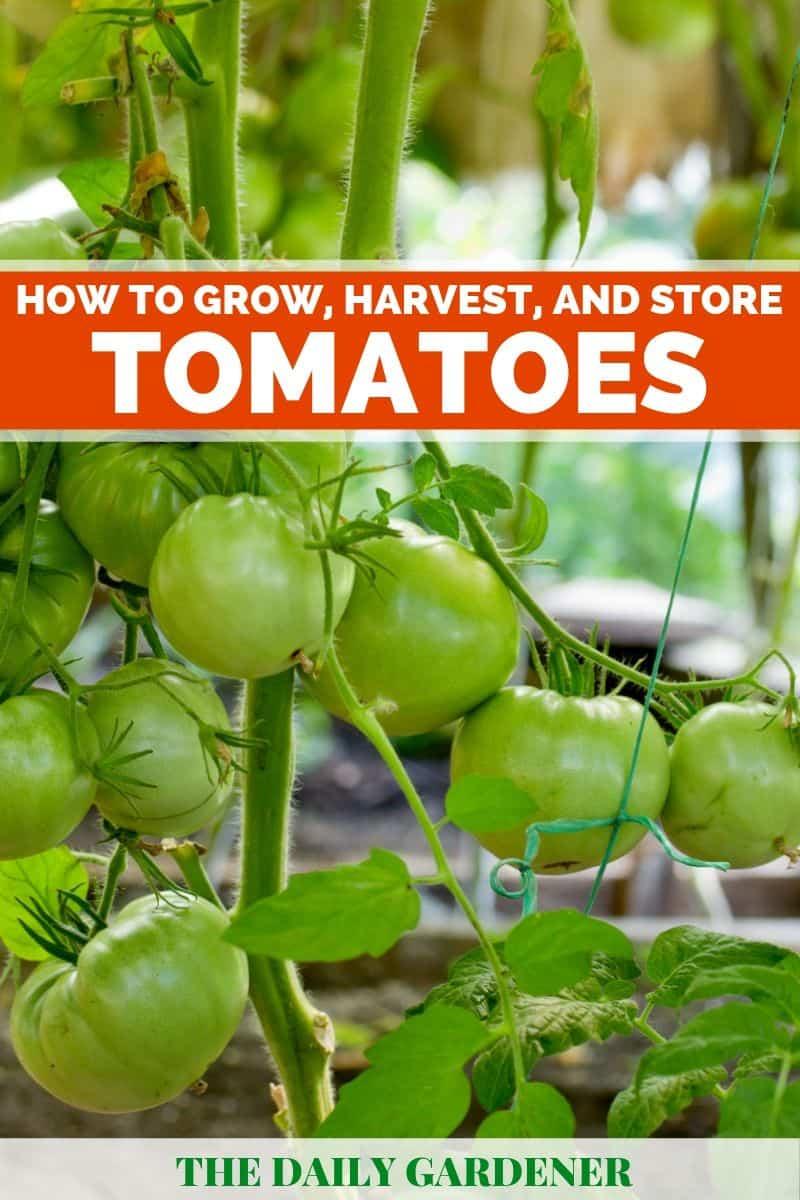 Grow Tomatoes pin