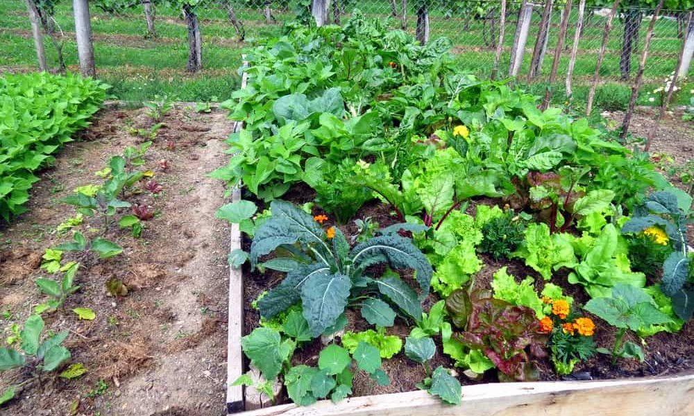 How to Plan a Vegetable Garden 1