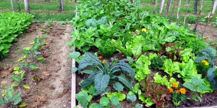 How to Plan a Vegetable Garden 1