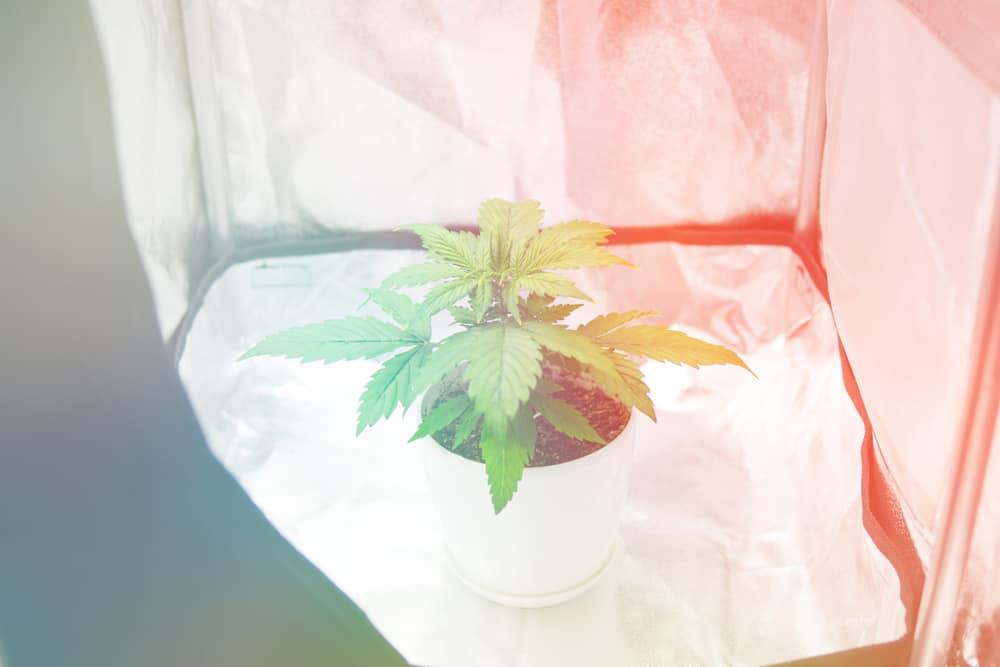 Indoor Grow Tent chamber