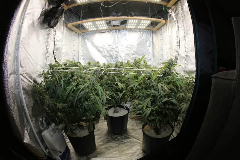 Indoor Grow Tent equipment
