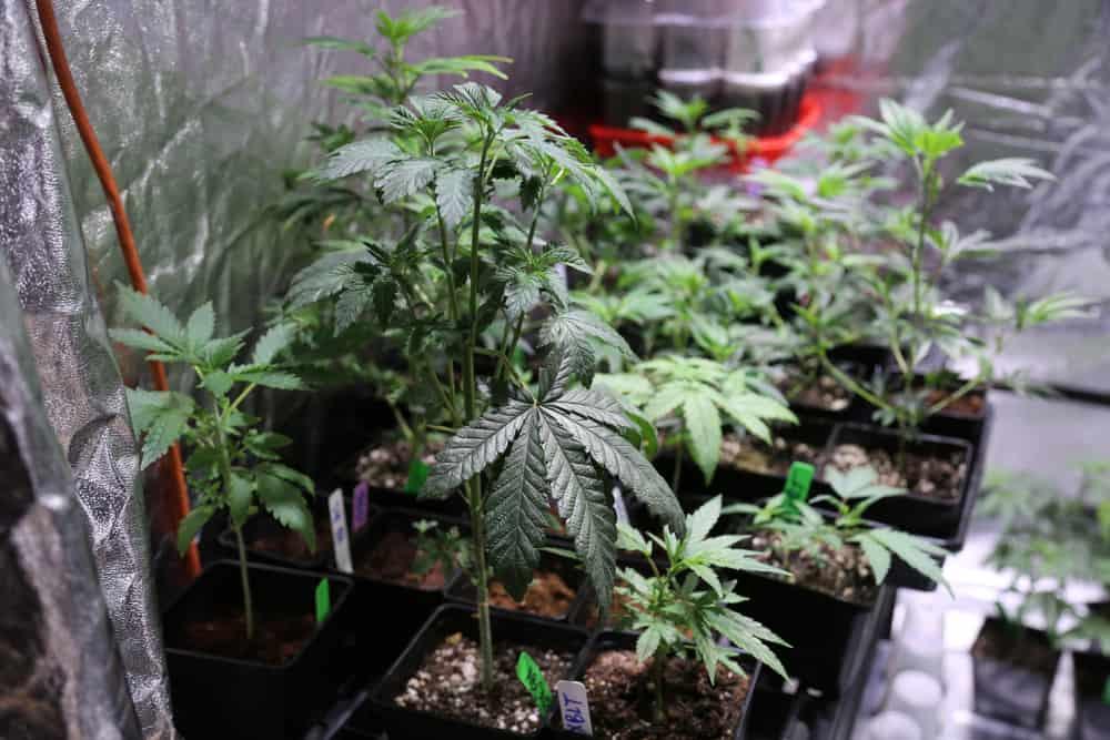 Indoor Grow Tent size matters