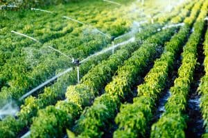 Irrigation System Release Your Hands and Saving Your time