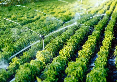 Irrigation System: Release Your Hands and Saving Your time