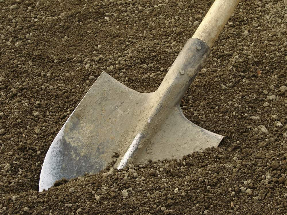 Kale Soil