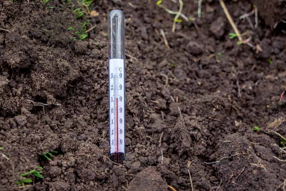 Kale soil Temperature