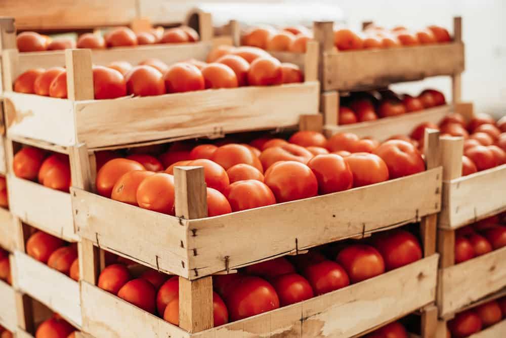 TomatoesStorage