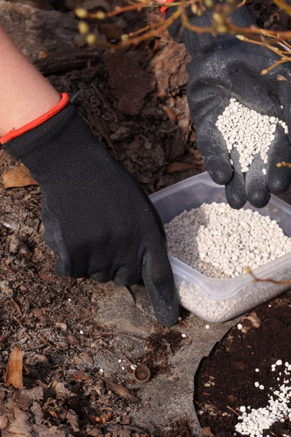Bay Laurel Fertilizing