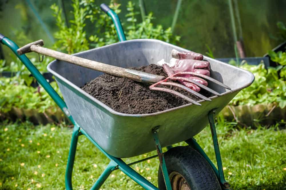 Fennel Fertilizing