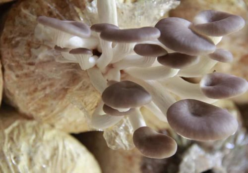 How to Plant, Grow and Store Mushrooms at Home