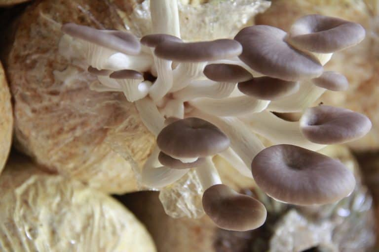 How to Plant, Grow and Store Mushrooms