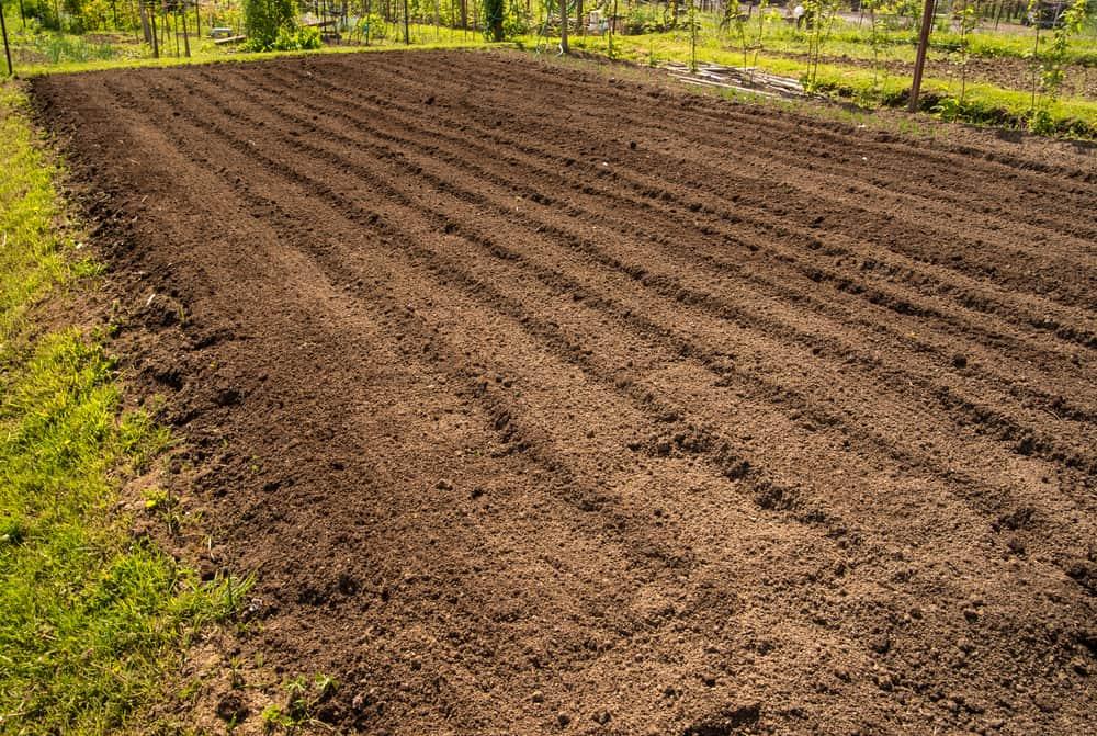 Luffa Aegyptiaca Soil