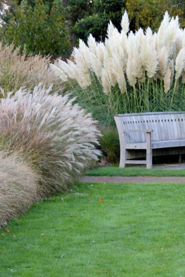 13 Easy Ornamental Grasses for Landscaping Your Garden