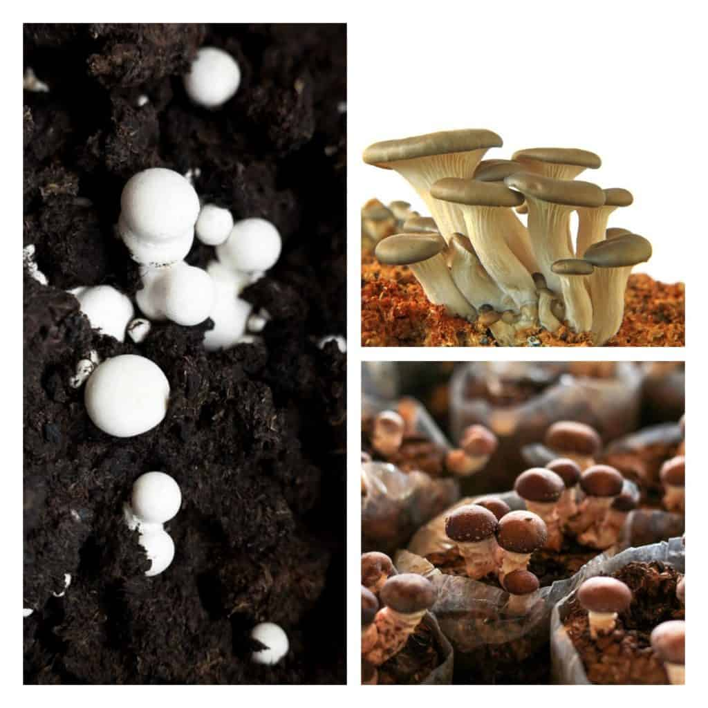 Pick out the right type of mushrooms