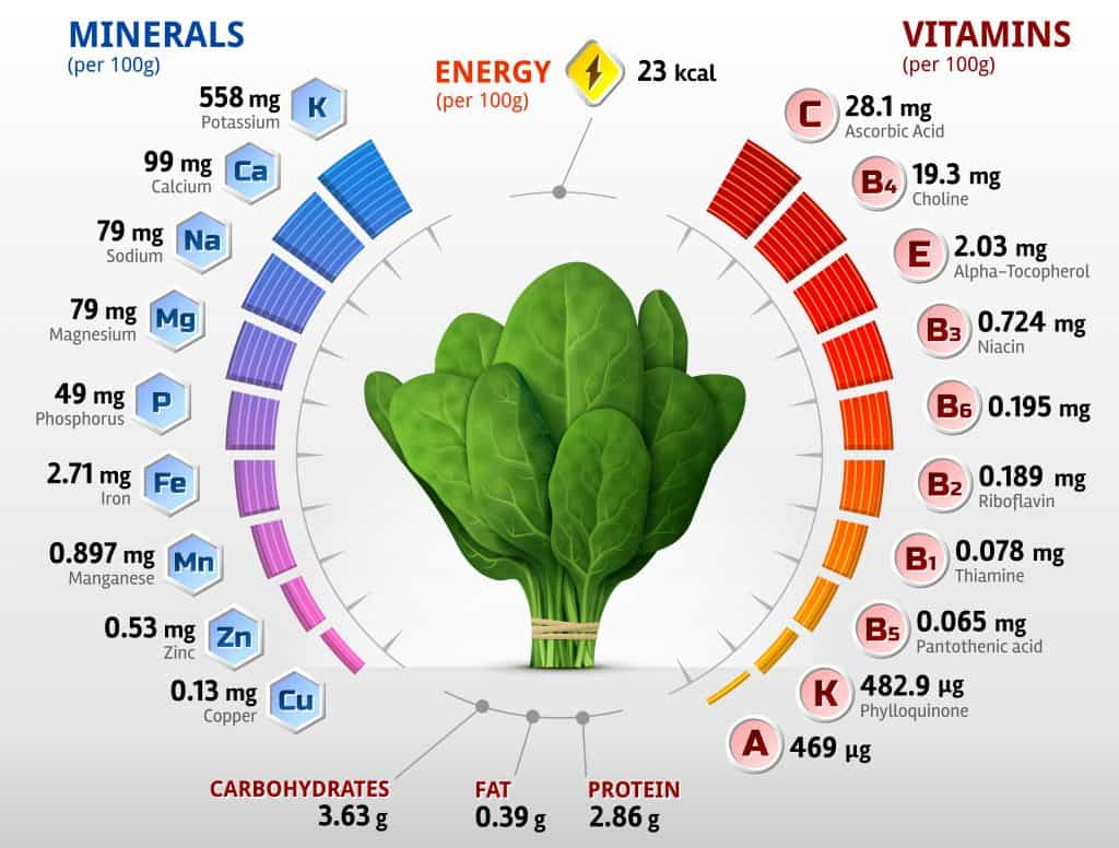 Why You Should Grow Spinach