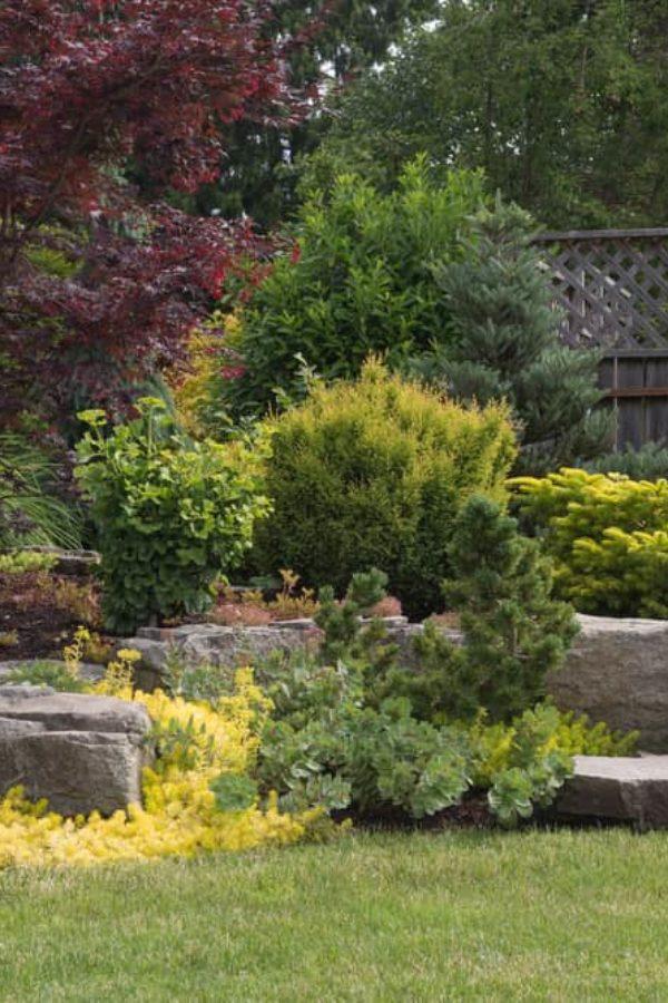 11 Best Evergreen Shrubs for Your Garden
