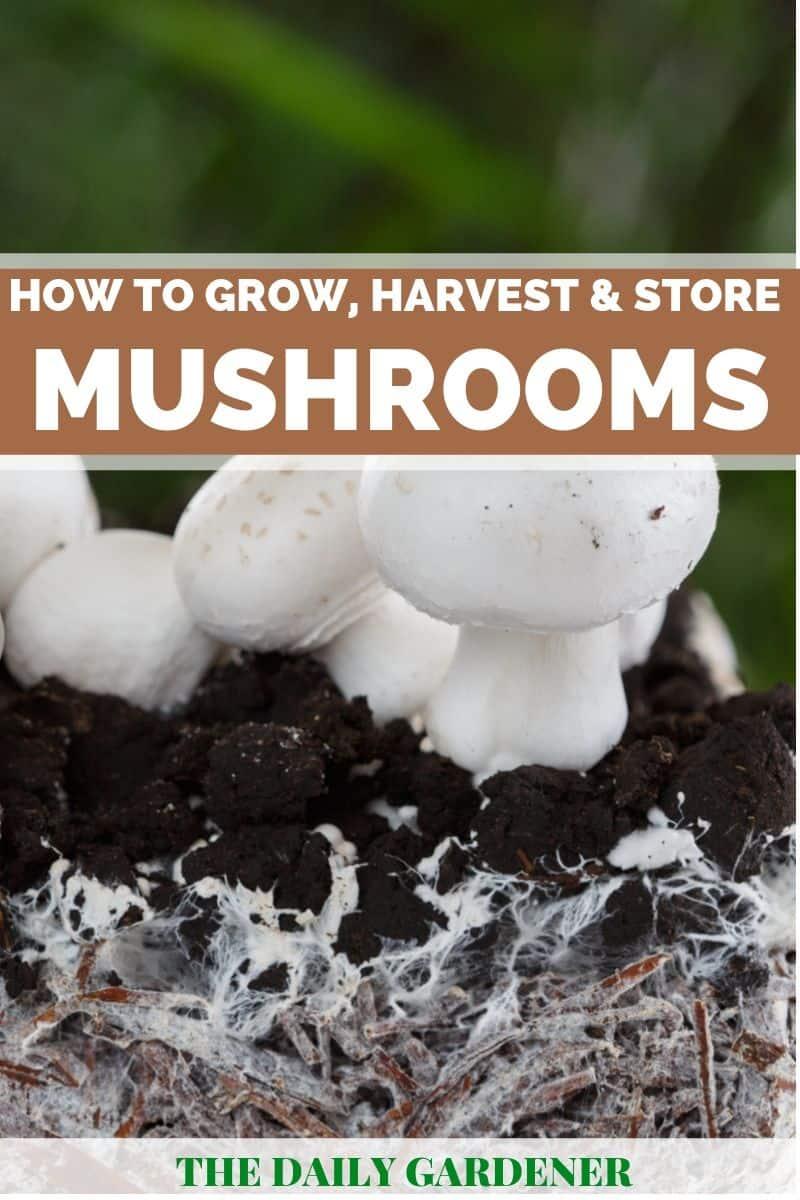 growing mushrooms 1