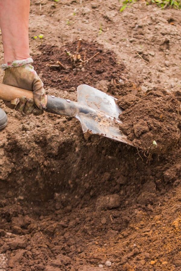 Azalea Soil