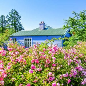 Best Privacy Shrubs for Creating Hedges