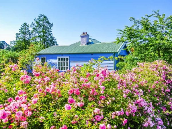 17 Best Privacy Shrubs for Creating Hedges