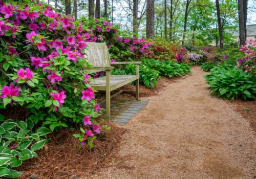 How to Grow & Care Azalea in Your Garden?