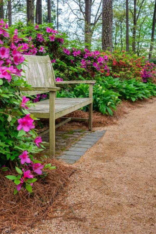How to Grow & Care Azalea in Your Garden?