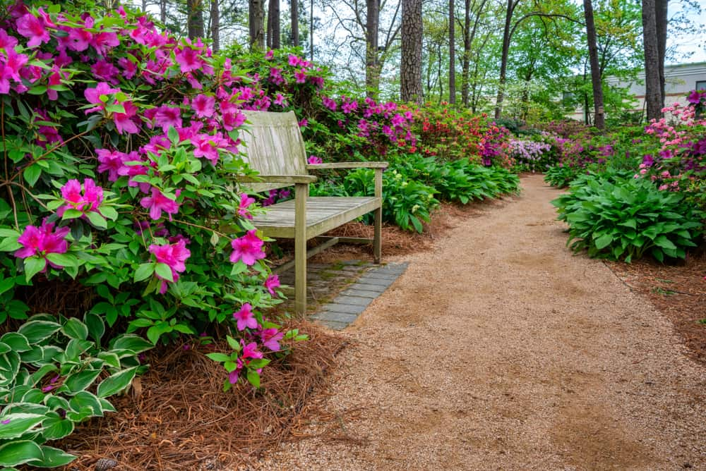 How to Grow & Care Azalea in Your Garden