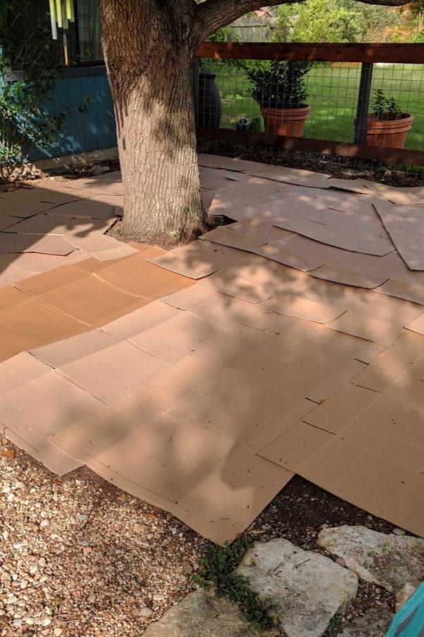 Newspaper and cardboard mulch
