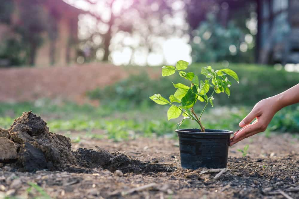 Prepare the soil and start planting