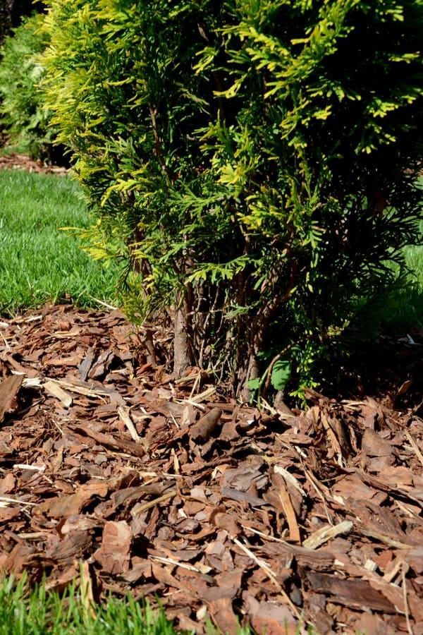 Wood bark mulch